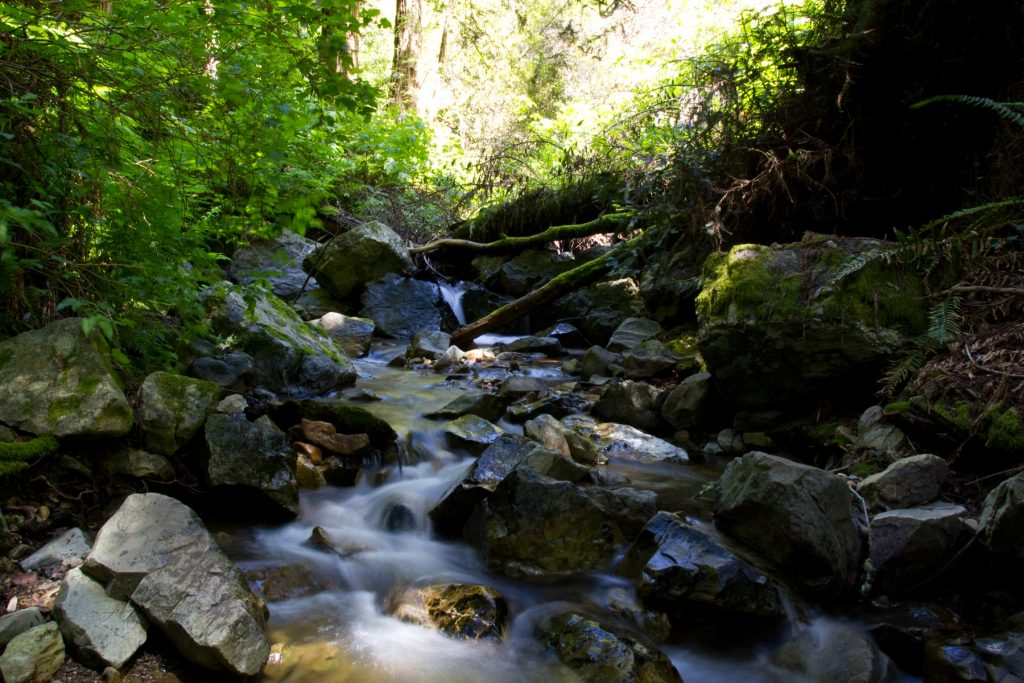 Steep Ravine Trail Waterfalls - Mt. Tam