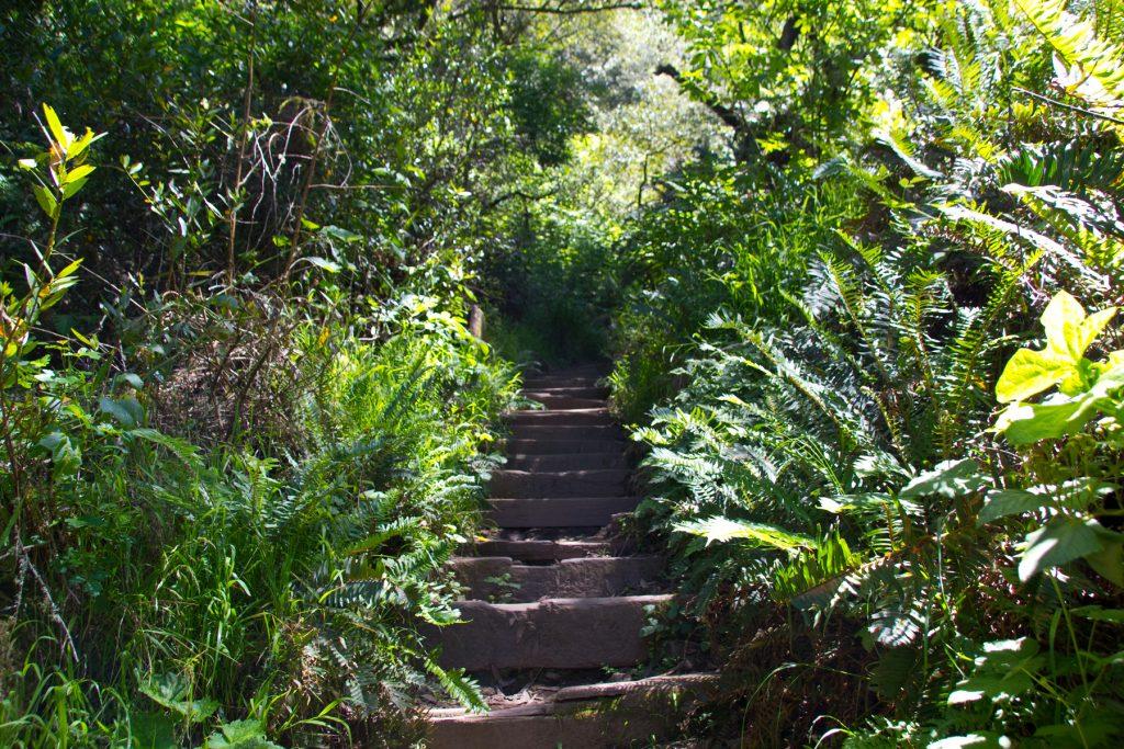 Dipsea Trail - Mt. Tam