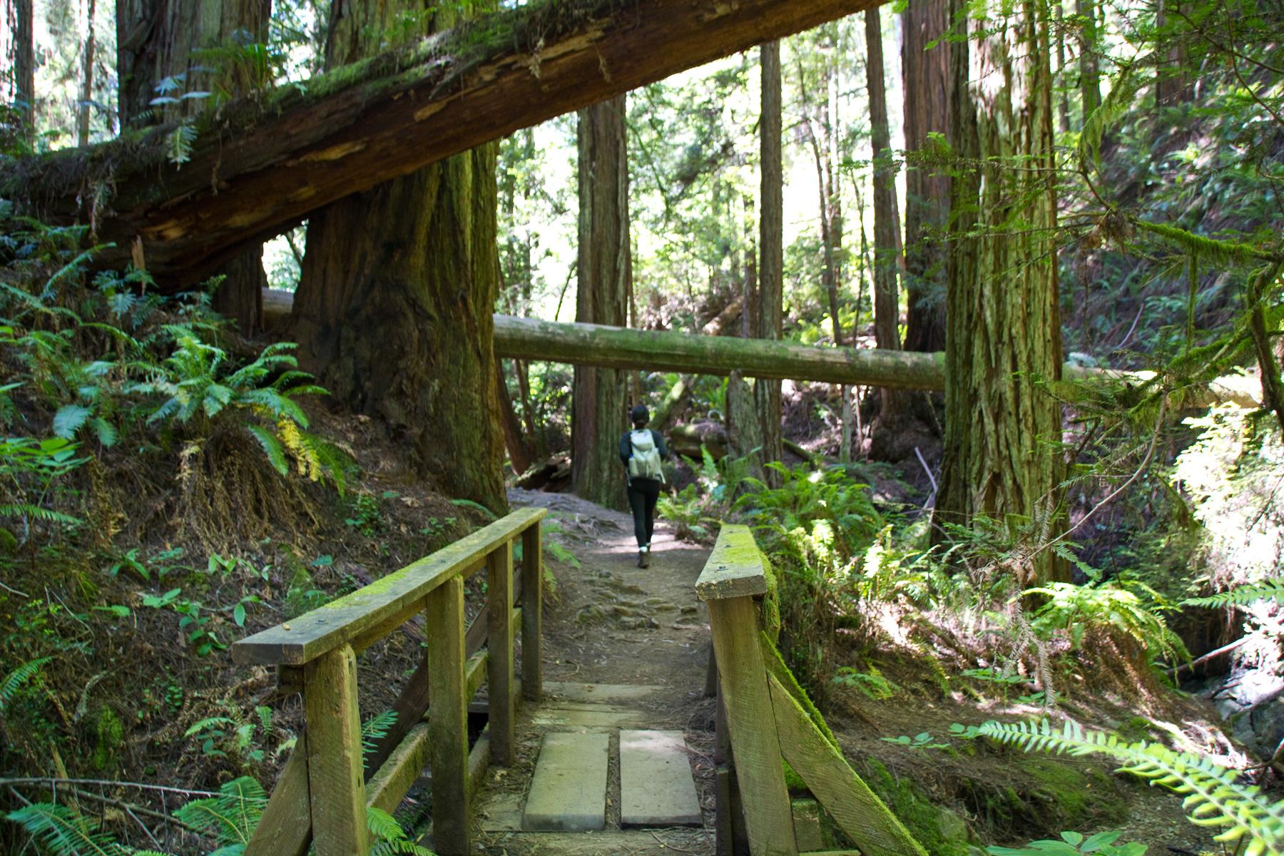 Steep Ravine Trail Bridge - Mt. Tam