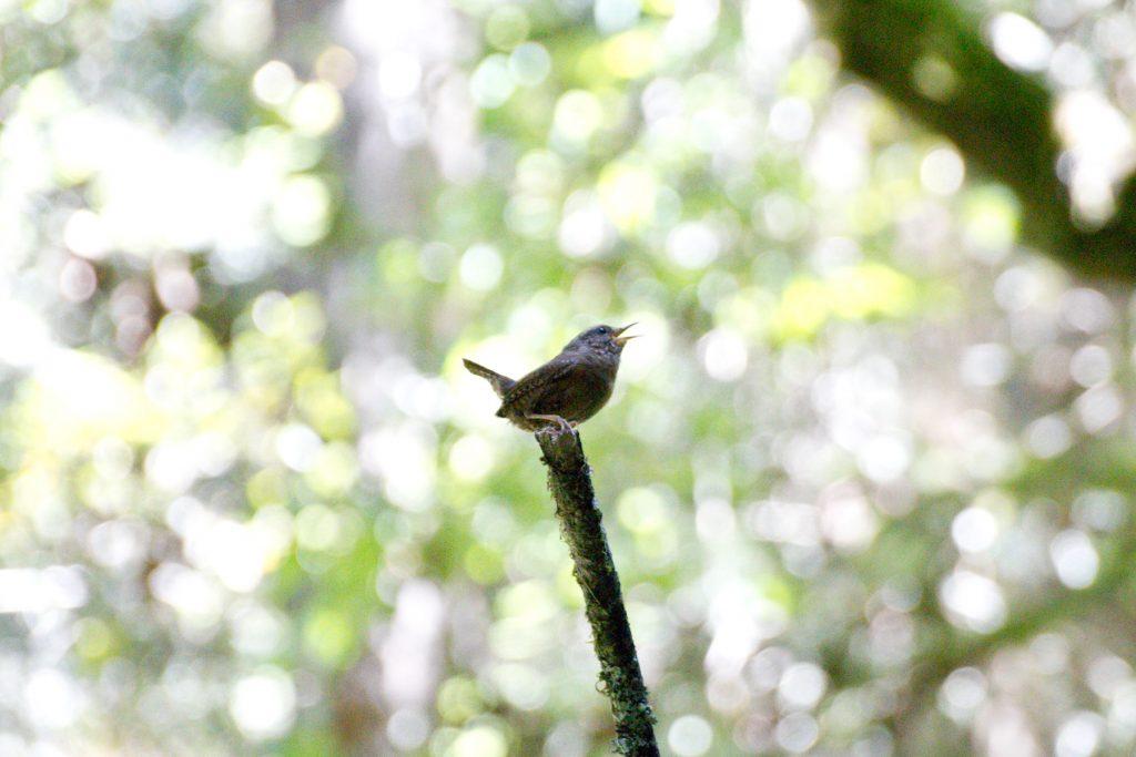 Wildlife - Steep Ravine Trail