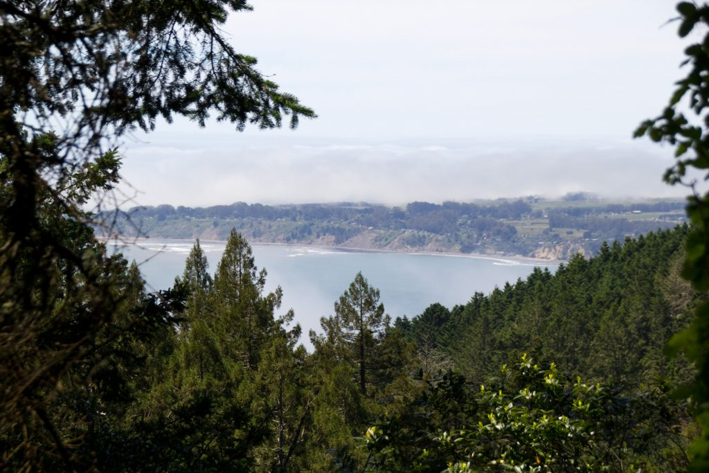View of Stinson Beach from Dipsea Trail